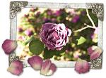 Blog_lavenderrose
